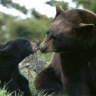 Mama Bear God